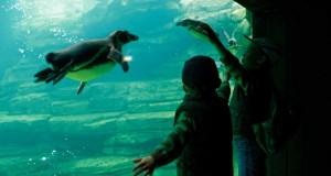 Amnéville, zoo bâtisseur