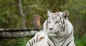 Le zoo d'Amnéville devient vitrine mondiale des animaux sauvages