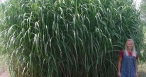 Des fibres végétales pour construire et isoler