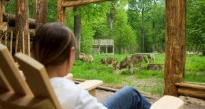 En cabane ou en lodge, dors avec les loups !