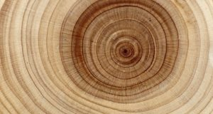 Chimie : le trésor caché des molécules du bois