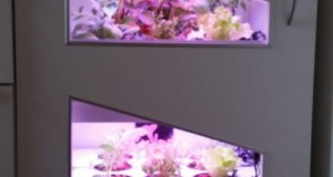 Pousse-Légume crée le premier appareil électroménager de jardinage