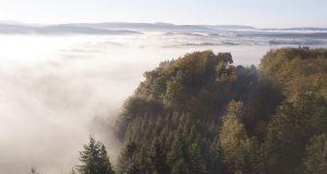Grand Est: une centaine d'acteurs unis pour valoriser la forêt