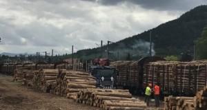 Forêt: la crise des scolytes impose des convois de bois des Vosges aux Landes