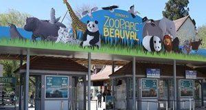 Malgré l'aide de l'Etat, les zoos vont perdre des plumes dans la crise