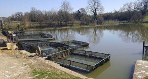 Meuse: une entreprise adaptée fait le pari d'une pisciculture naturelle